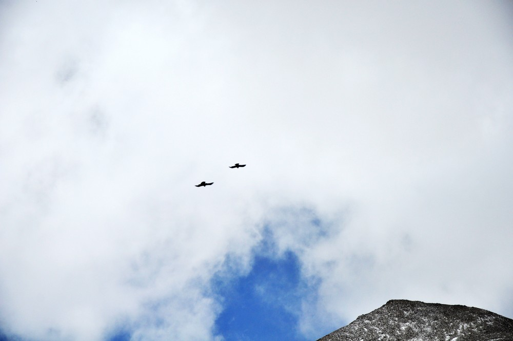DSC_0235比翼双飞.jpg